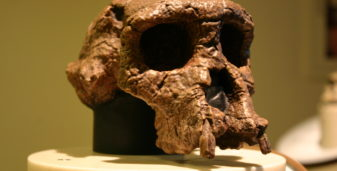 Five Key Points about Human Origins