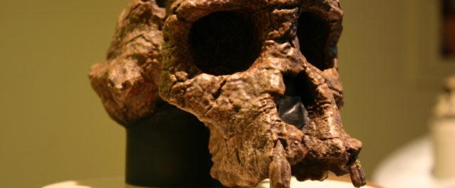 Five Key Points about Human Origins